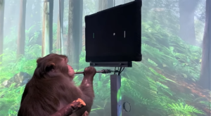 Elon Musk Makes Monkey Control A Video Game With His Mind